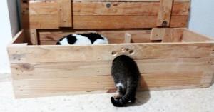 gatitos-jugando-casa-para-gatos