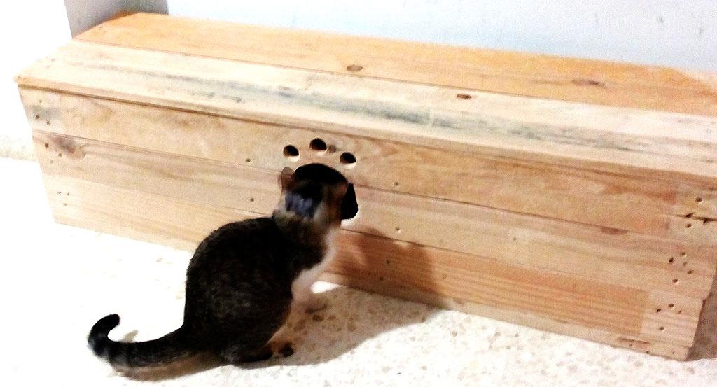 gato-curioso-casita-gatos