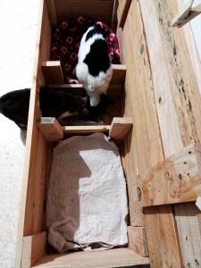 gatos-en-casa-para-gatos