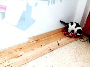 tomando-medidas-casita-gatos