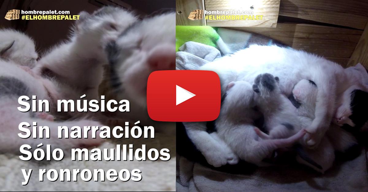 Vídeo de gatitos mamando
